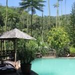Swimming Pool Fig Tree Hill